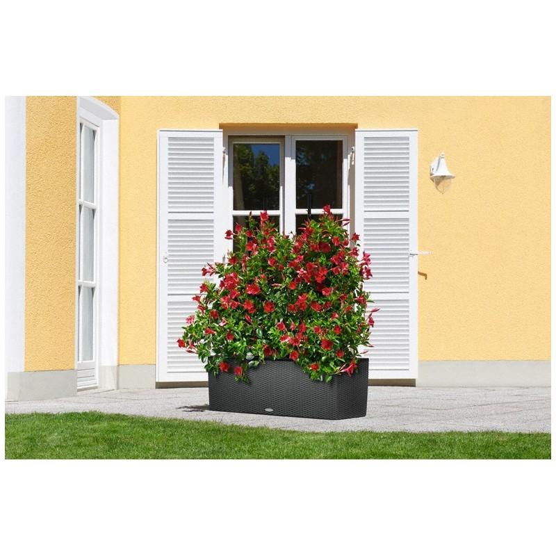 graticcio per trio 40 nero 113x170 cm lechuza. Black Bedroom Furniture Sets. Home Design Ideas