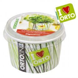 Vaso Ortolino Coriandolo - VERDEMAX 2022 - In regalo Etichetta Adesiva per personalizzare il tuo Ortolino