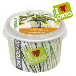 Vaso Ortolino Salvia - VERDEMAX 2028 - In regalo Etichetta Adesiva per personalizzare il tuo Ortolino