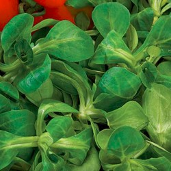 Bustina semi di Valeriana Verte à Coeur Plein 2- Sementi DOTTO 176