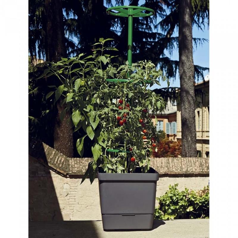 Supporto per piante rampicanti ma anche un modo per for Piante rampicanti in vaso
